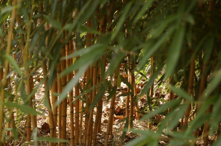 Kobierce ścielę pod…bambusami