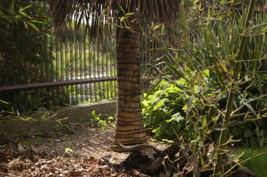 Tropikalizacja palmy
