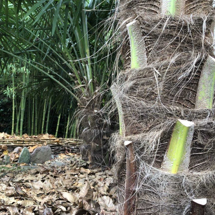 Jak szybko palmy rosną w Polsce ?(2)